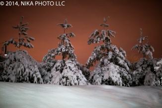 Winter Snow Nika Photo-2